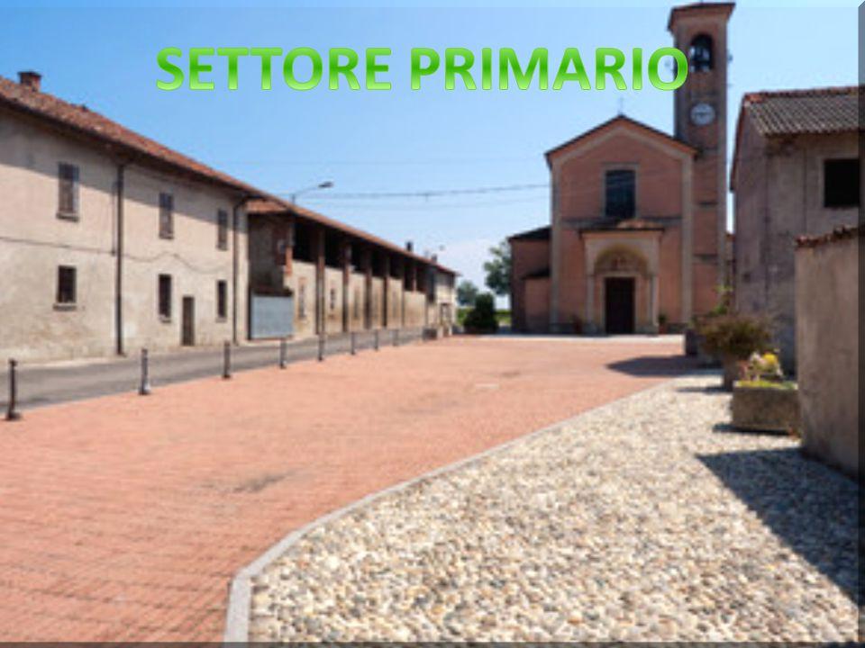 LE TRE FASI Nella prima fase il nostro gruppo ha intervistato varie aziende tra cui: pizzeria dei pugliesi, la biblioteca di Melegnano,il ciclista e la cascina di Casaletto.
