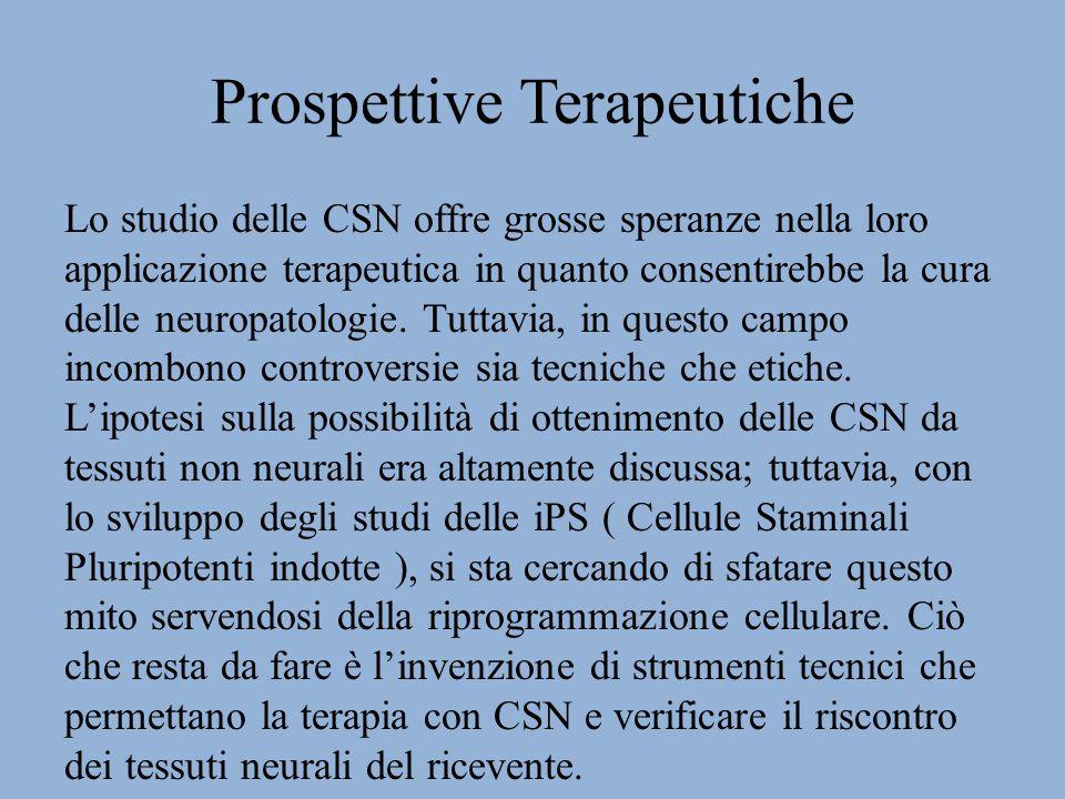 Prospettive Terapeutiche Lo studio delle CSN offre grosse speranze nella loro applicazione terapeutica in quanto consentirebbe la cura delle neuropatologie.