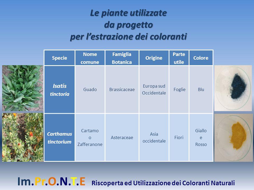 Le piante utilizzate da progetto per l'estrazione dei coloranti Specie Nome comune Famiglia Botanica Origine Parte utile Colore Isatis tinctoria Guado