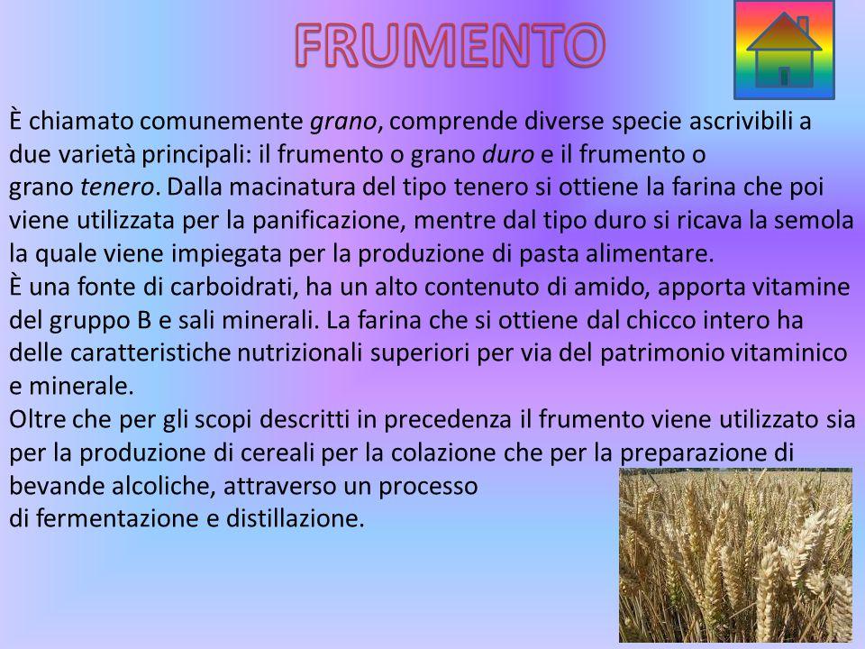 È chiamato comunemente grano, comprende diverse specie ascrivibili a due varietà principali: il frumento o grano duro e il frumento o grano tenero.