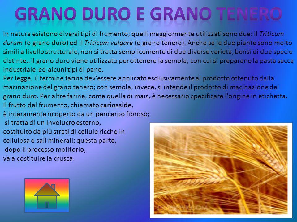 In natura esistono diversi tipi di frumento; quelli maggiormente utilizzati sono due: il Triticum durum (o grano duro) ed il Triticum vulgare (o grano tenero).