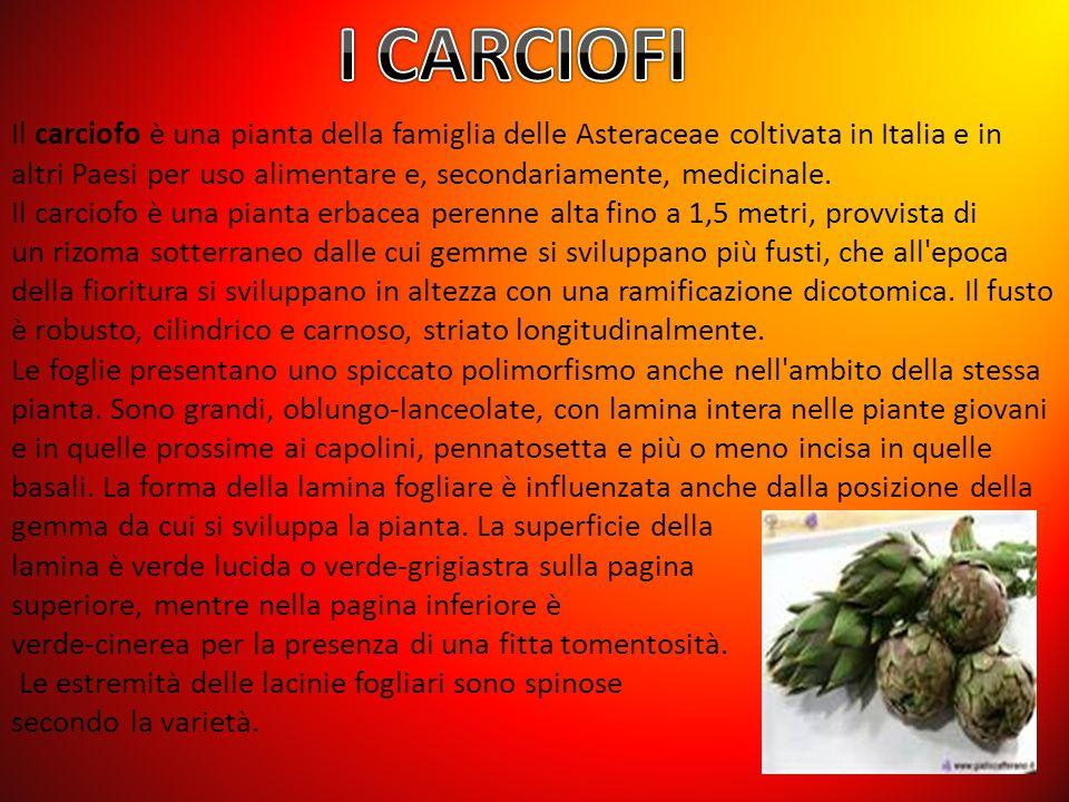 Il carciofo è una pianta della famiglia delle Asteraceae coltivata in Italia e in altri Paesi per uso alimentare e, secondariamente, medicinale. Il ca