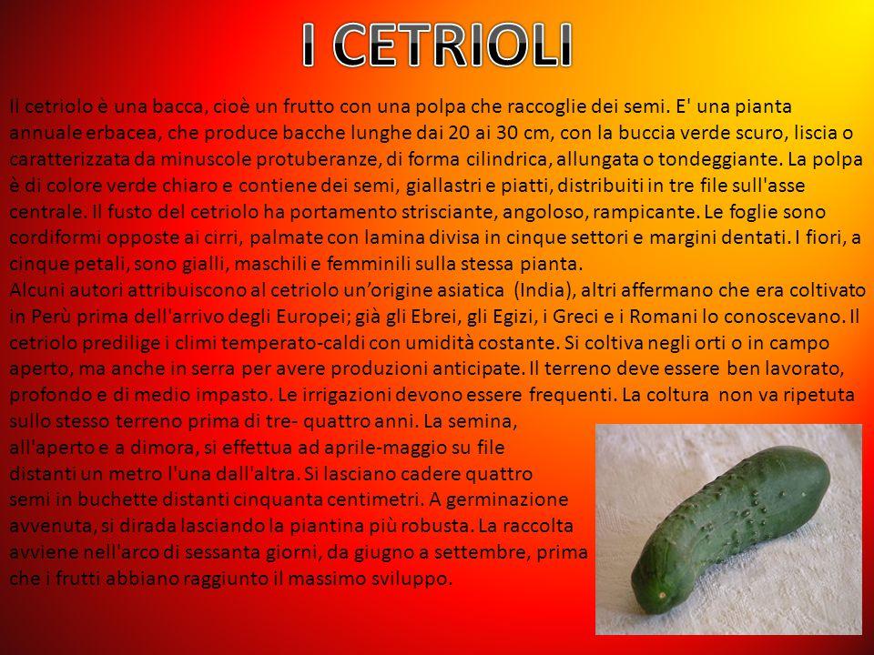 Il cetriolo è una bacca, cioè un frutto con una polpa che raccoglie dei semi.