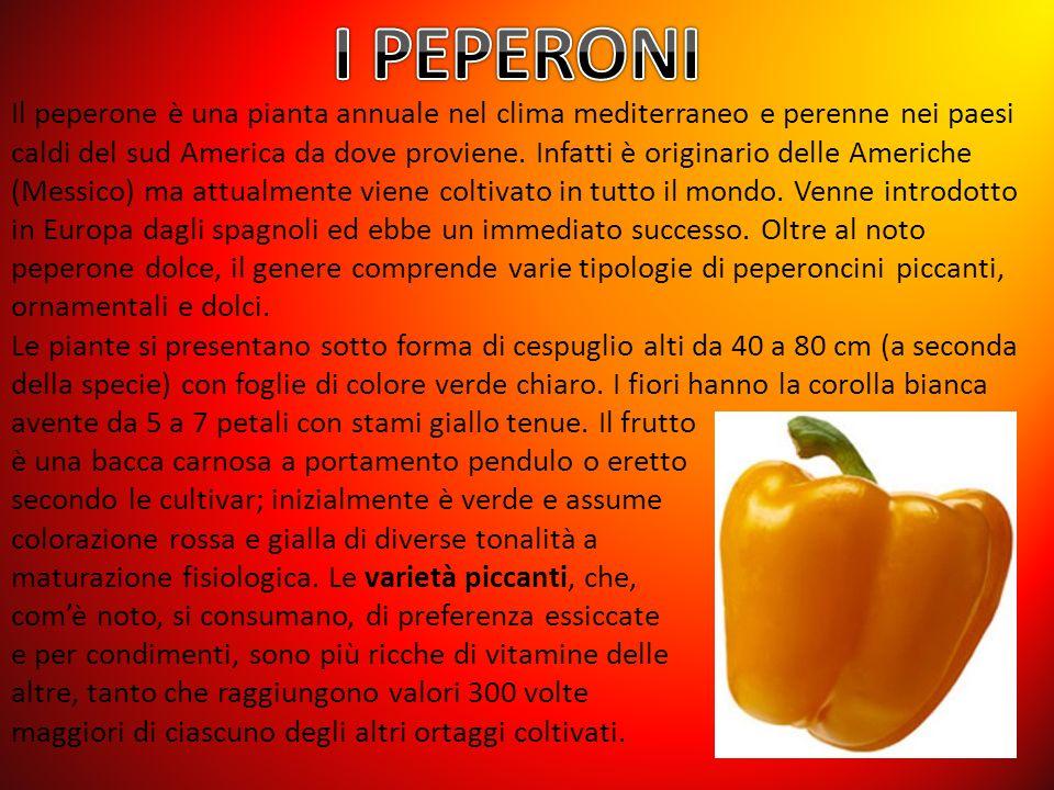 Il peperone è una pianta annuale nel clima mediterraneo e perenne nei paesi caldi del sud America da dove proviene.