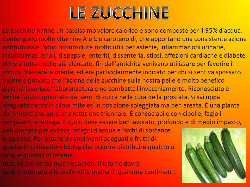 Le zucchine hanno un bassissimo valore calorico e sono composte per il 95% d acqua.