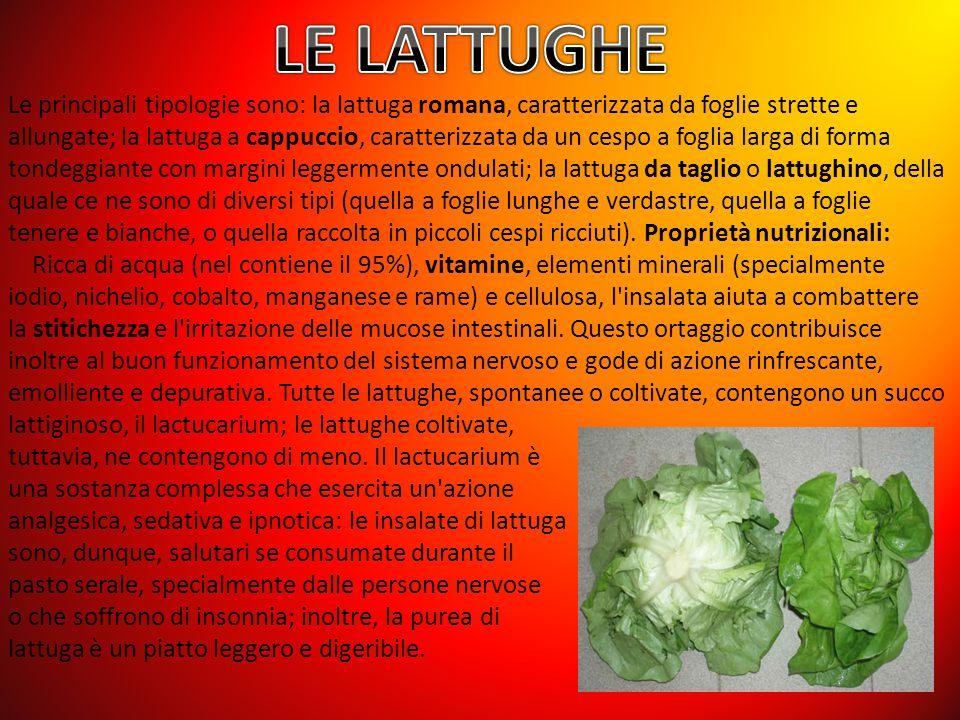 Le principali tipologie sono: la lattuga romana, caratterizzata da foglie strette e allungate; la lattuga a cappuccio, caratterizzata da un cespo a fo