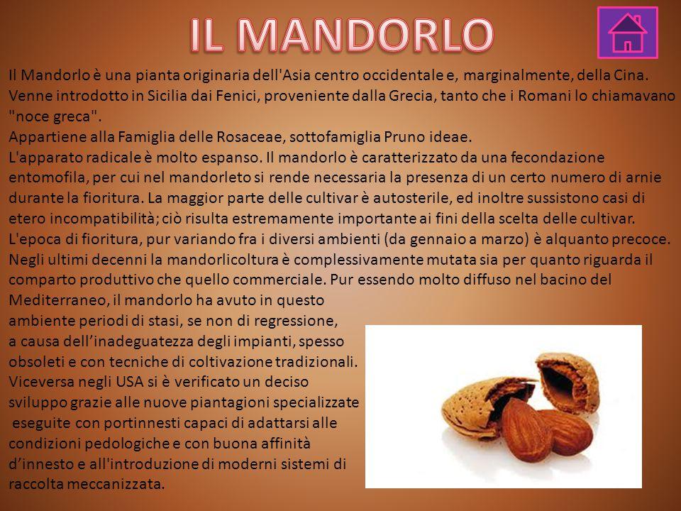 Il Mandorlo è una pianta originaria dell'Asia centro occidentale e, marginalmente, della Cina. Venne introdotto in Sicilia dai Fenici, proveniente dal