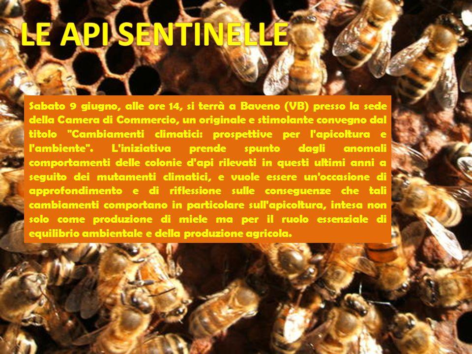 Sabato 9 giugno, alle ore 14, si terrà a Baveno (VB) presso la sede della Camera di Commercio, un originale e stimolante convegno dal titolo Cambiamenti climatici: prospettive per l apicoltura e l ambiente .