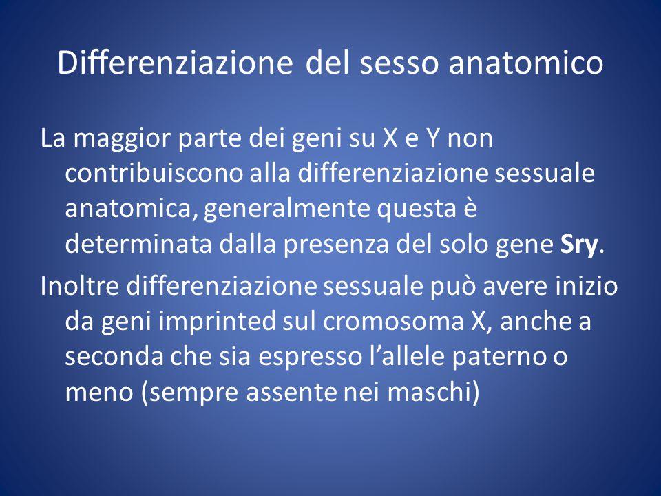 Differenziazione del sesso anatomico La maggior parte dei geni su X e Y non contribuiscono alla differenziazione sessuale anatomica, generalmente questa è determinata dalla presenza del solo gene Sry.