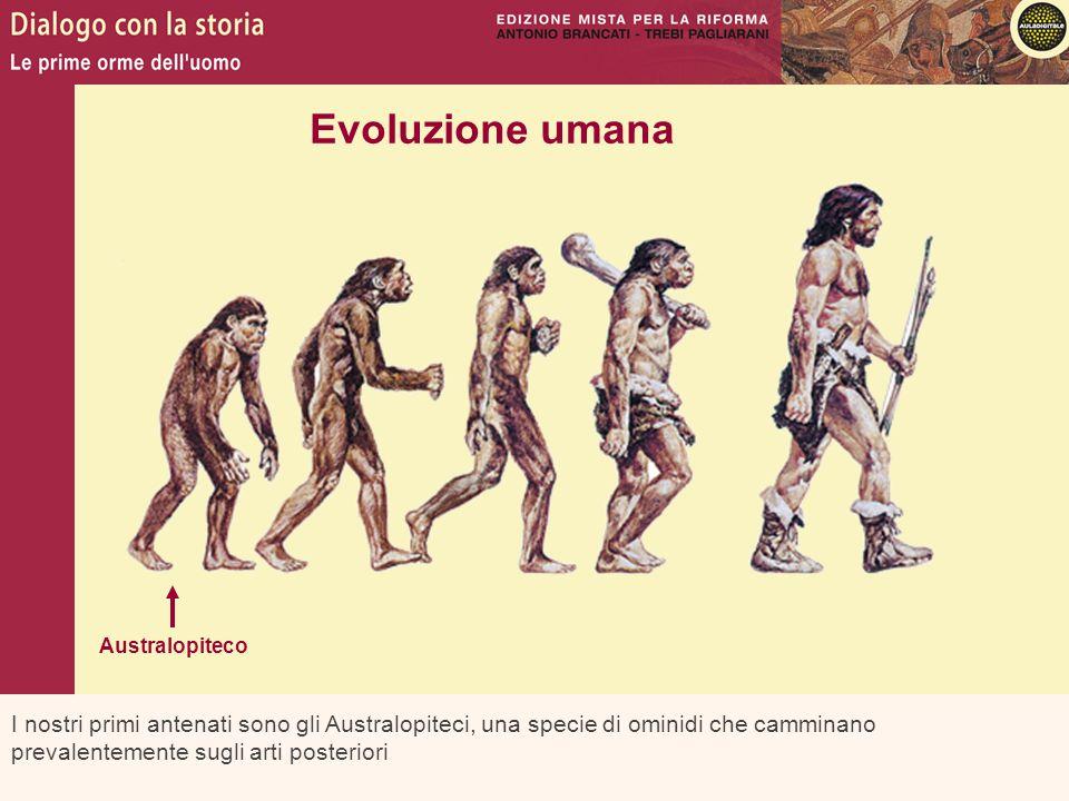 I nostri primi antenati sono gli Australopiteci, una specie di ominidi che camminano prevalentemente sugli arti posteriori Evoluzione umana Australopi
