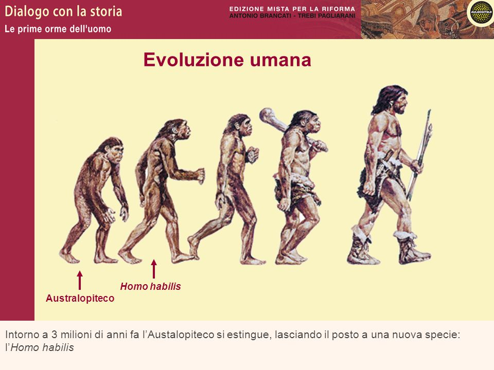 Intorno a 3 milioni di anni fa l'Austalopiteco si estingue, lasciando il posto a una nuova specie: l'Homo habilis Evoluzione umana Australopiteco Homo