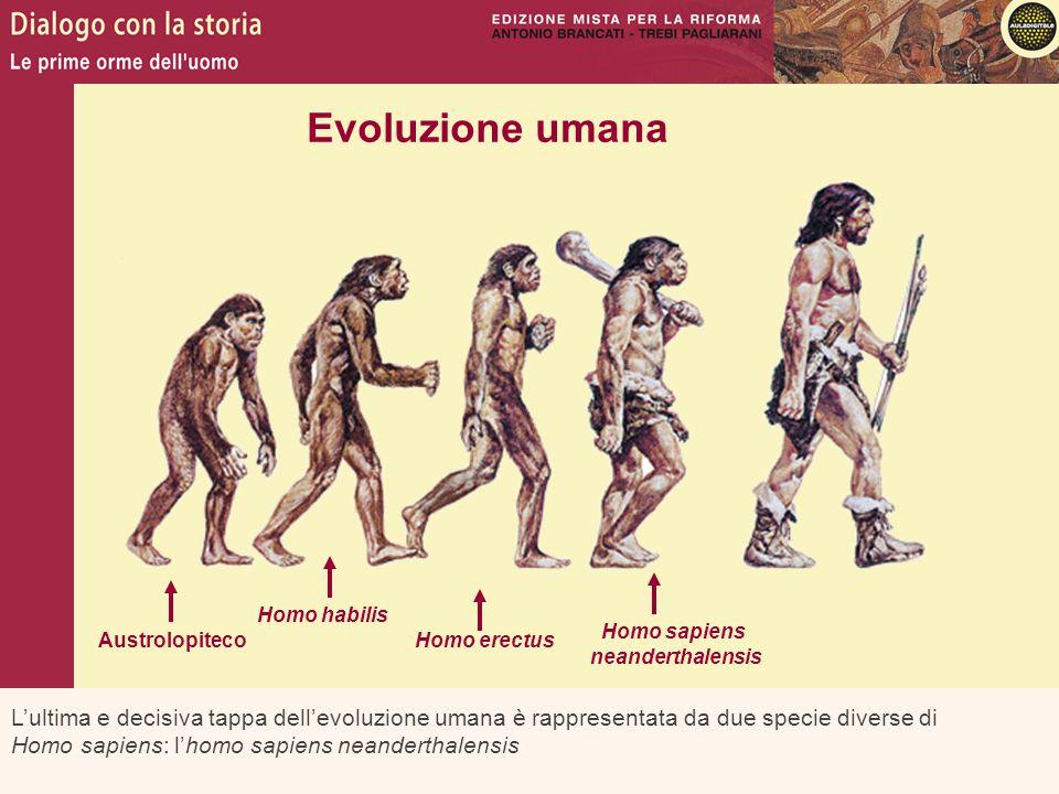 L'ultima e decisiva tappa dell'evoluzione umana è rappresentata da due specie diverse di Homo sapiens: l'homo sapiens neanderthalensis Evoluzione uman