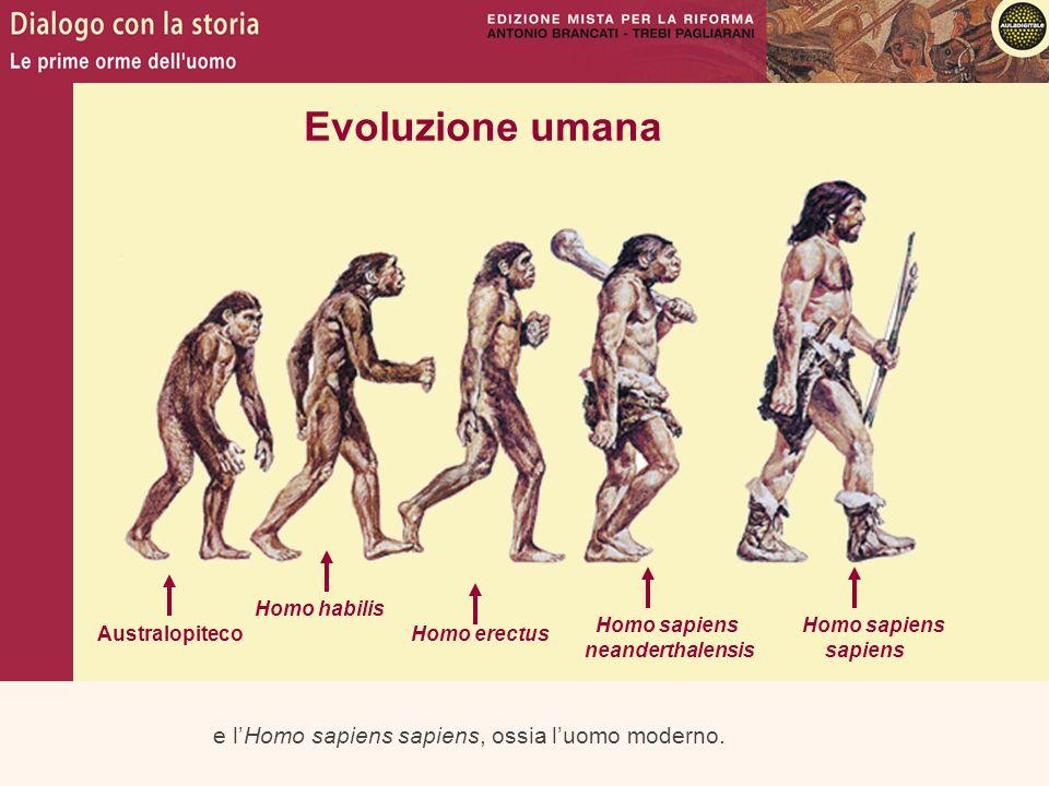 e l'Homo sapiens sapiens, ossia l'uomo moderno. Evoluzione umana Australopiteco Homo habilis Homo erectus Homo sapiens neanderthalensis Homo sapiens s
