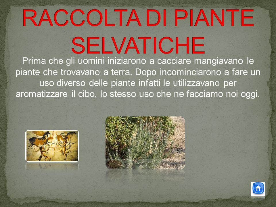 Prima che gli uomini iniziarono a cacciare mangiavano le piante che trovavano a terra.