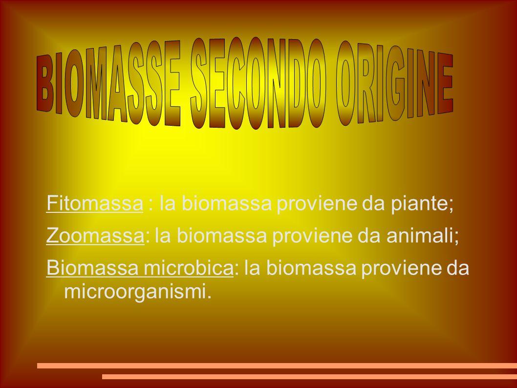 Fitomassa : la biomassa proviene da piante; Zoomassa: la biomassa proviene da animali; Biomassa microbica: la biomassa proviene da microorganismi.