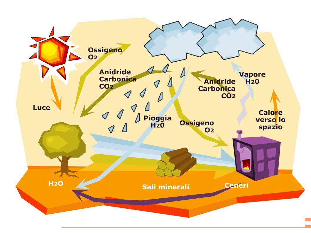 Finora non si è giunti ad una definizione univoca di Biomassa.