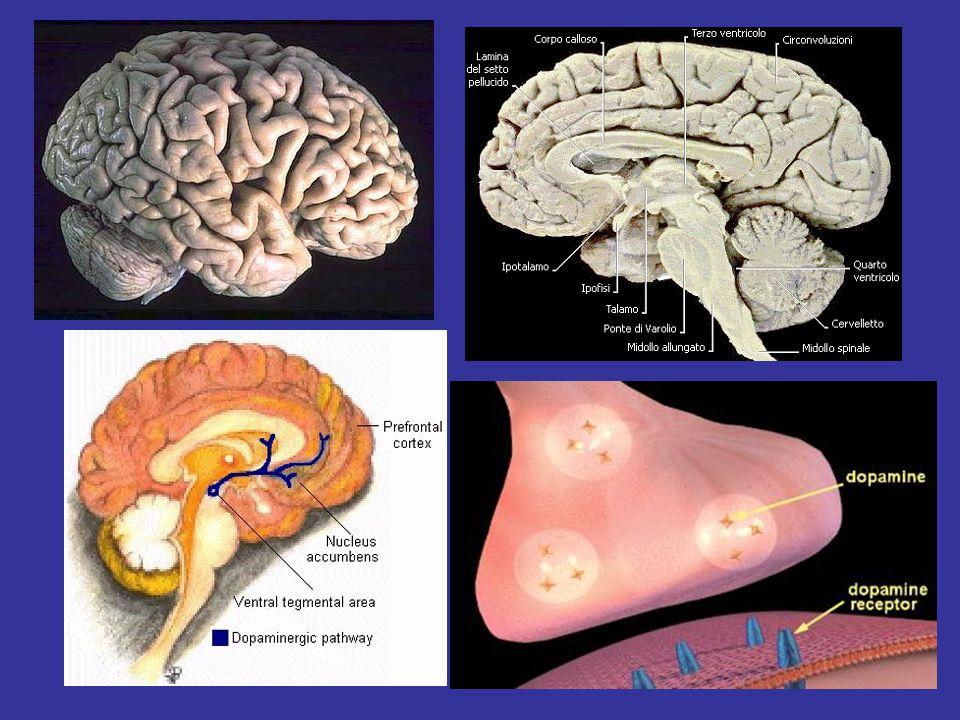 Malattie diverse hanno sintomi psicologici uguali Ictus (infarto cerebrale silente) Ipocondria Pseudodemenza Alcolismo Disturbi dell'umore