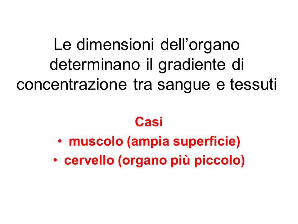 Le dimensioni dell'organo determinano il gradiente di concentrazione tra sangue e tessuti Casi muscolo (ampia superficie) cervello (organo più piccolo)