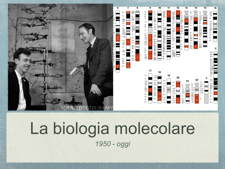 La biologia molecolare 1950 - oggi