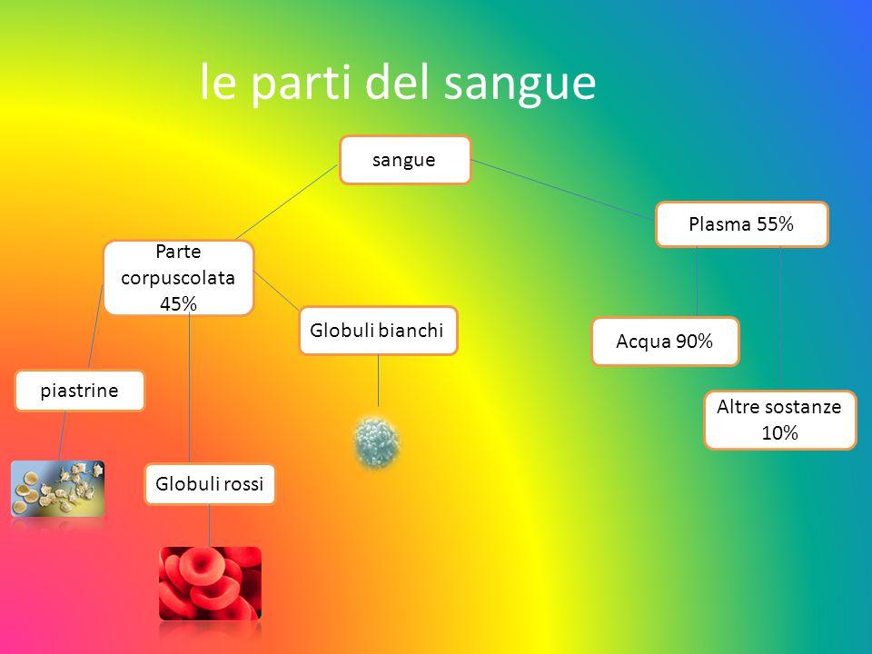 le parti del sangue sangue Parte corpuscolata 45% piastrine Globuli rossi Globuli bianchi Plasma 55% Acqua 90% Altre sostanze 10%