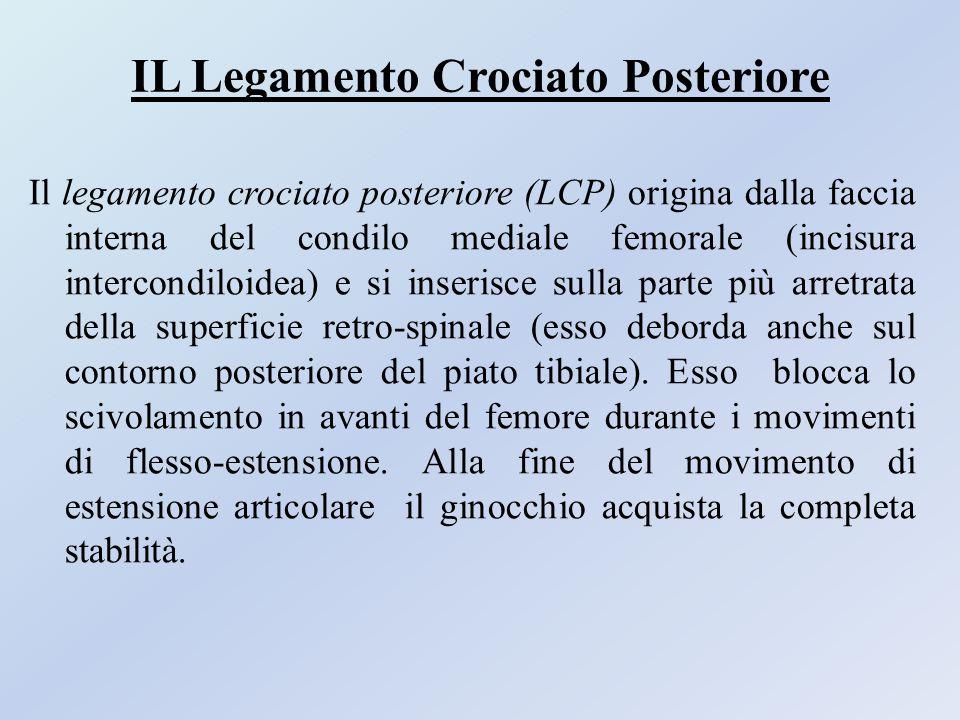 IL Legamento Crociato Posteriore Il legamento crociato posteriore (LCP) origina dalla faccia interna del condilo mediale femorale (incisura intercondi