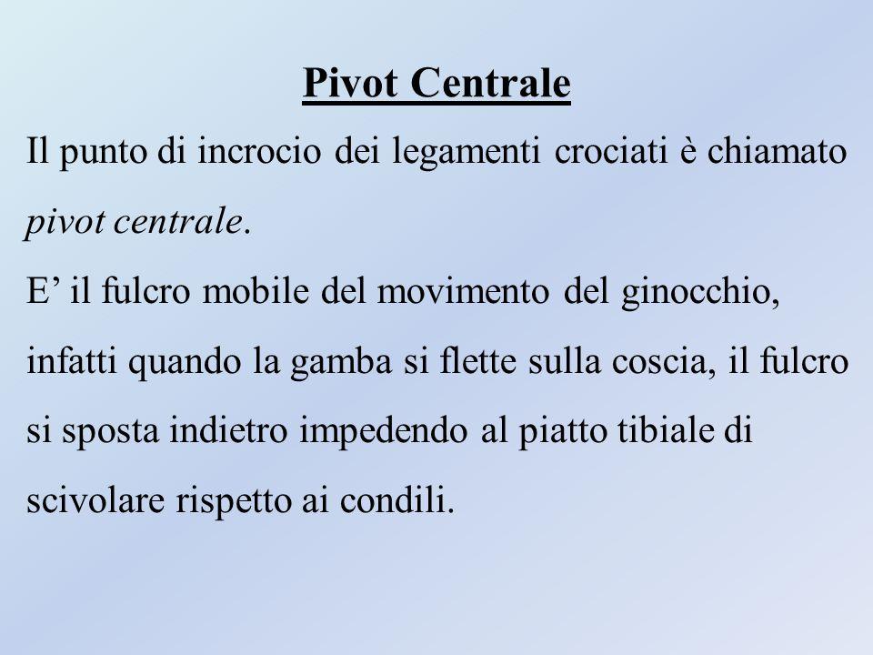 Pivot Centrale Il punto di incrocio dei legamenti crociati è chiamato pivot centrale. E' il fulcro mobile del movimento del ginocchio, infatti quando