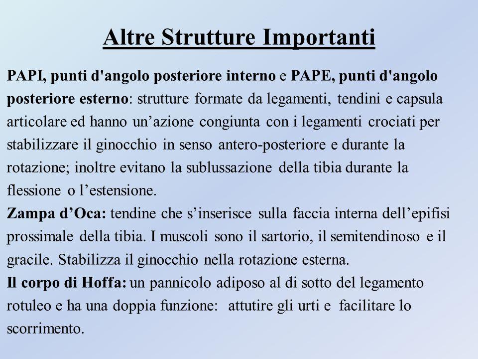 Altre Strutture Importanti PAPI, punti d'angolo posteriore interno e PAPE, punti d'angolo posteriore esterno: strutture formate da legamenti, tendini