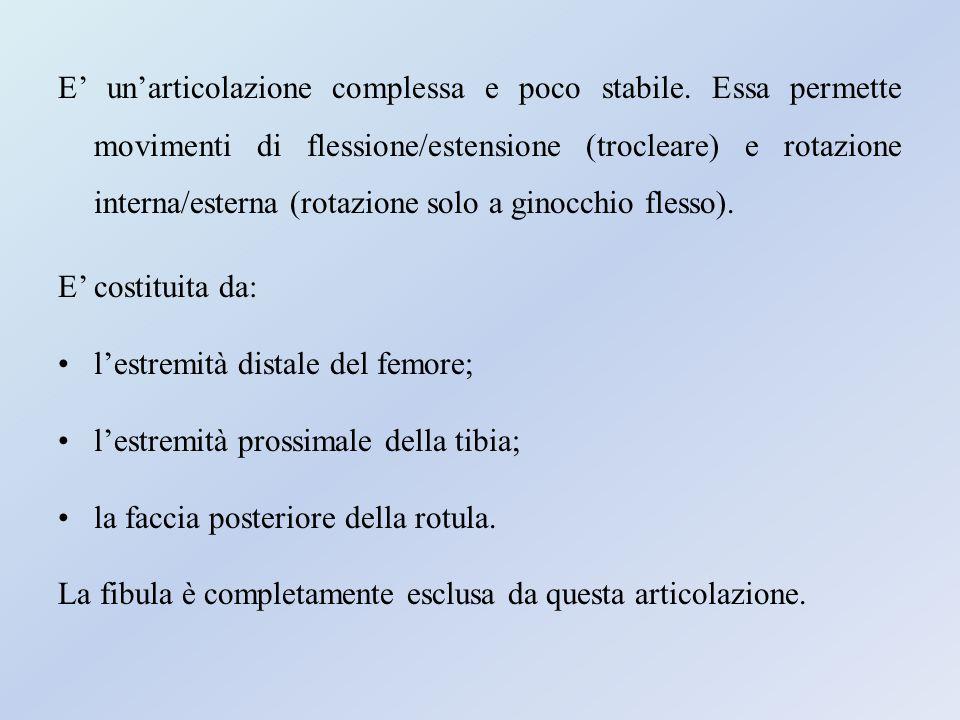Capsula Fibrosa e Membrana Sinoviale La capsula fibrosa.