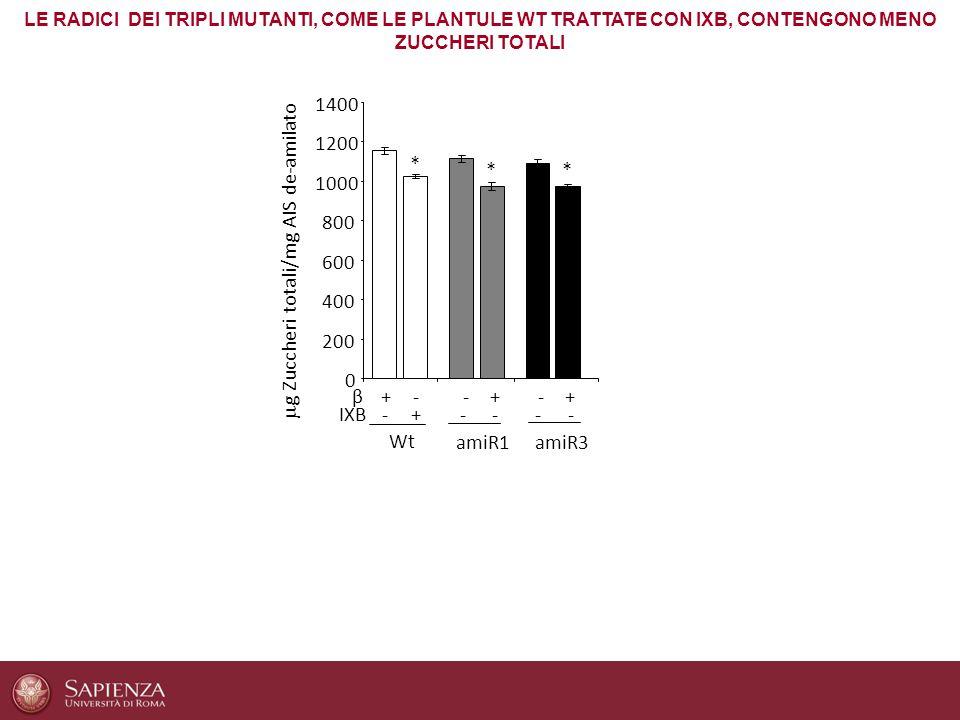 LE RADICI DEI TRIPLI MUTANTI, COME LE PLANTULE WT TRATTATE CON IXB, CONTENGONO MENO ZUCCHERI TOTALI 0 200 400 600 800 1000 1200 1400 Wt IXB-+---- --++