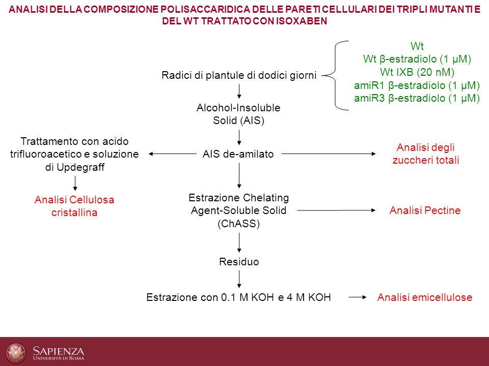 Alcohol-Insoluble Solid (AIS) AIS de-amilato Radici di plantule di dodici giorni Estrazione Chelating Agent-Soluble Solid (ChASS) Analisi emicellulose