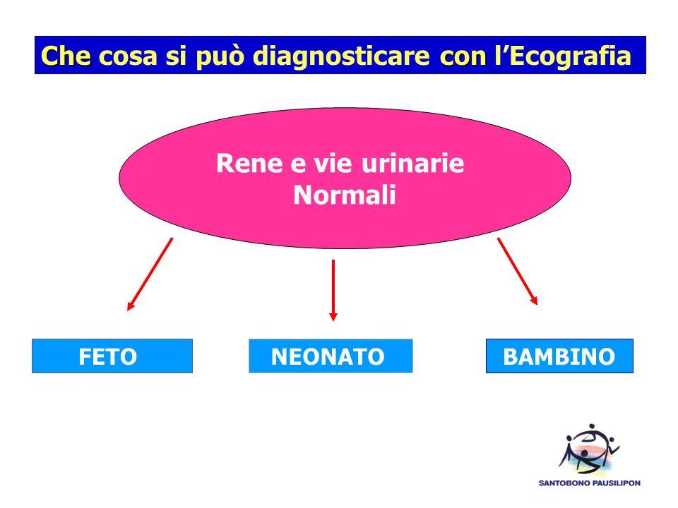 Checon Che cosa si può diagnosticare con l'Ecografia FETO Rene e vie urinarie Normali NEONATO BAMBINO
