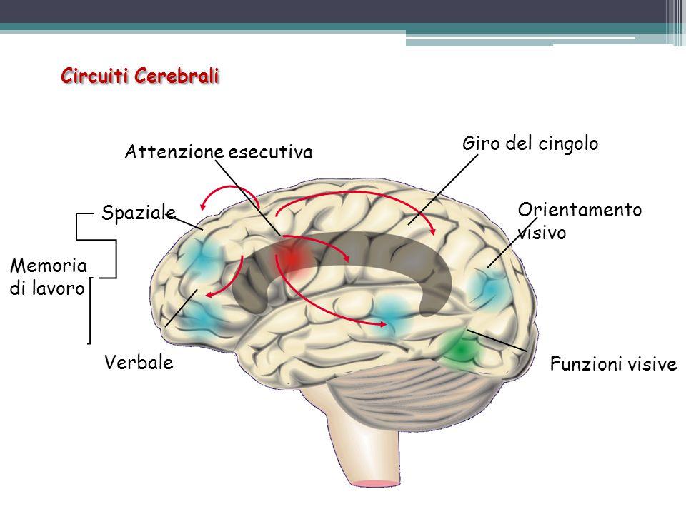 Neurofisiologia – flusso ematico Lobo frontale  Cervelletto  Corteccia senso-motoria  NormaleADHD Neuroanatomica Neurochimica