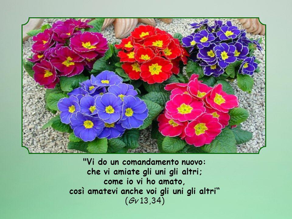 Vi do un comandamento nuovo: che vi amiate gli uni gli altri; come io vi ho amato, così amatevi anche voi gli uni gli altri (Gv 13,34)