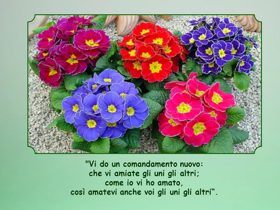 Vi do un comandamento nuovo: che vi amiate gli uni gli altri; come io vi ho amato, così amatevi anche voi gli uni gli altri .