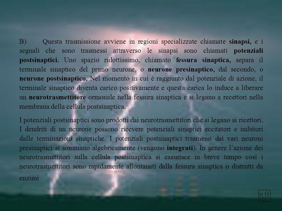 B) Questa trasmissione avviene in regioni specializzate chiamate sinapsi, e i segnali che sono trasmessi attraverso le sinapsi sono chiamati potenzial