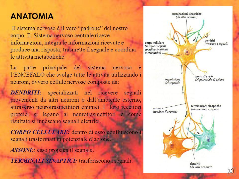 """ANATOMIA Il sistema nervoso è il vero """"padrone"""" del nostro corpo. Il Sistema nervoso centrale riceve informazioni, integra le informazioni ricevute e"""