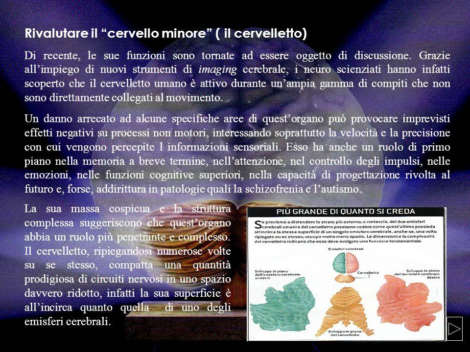 Rivalutare il cervello minore ( il cervelletto) Di recente, le sue funzioni sono tornate ad essere oggetto di discussione.