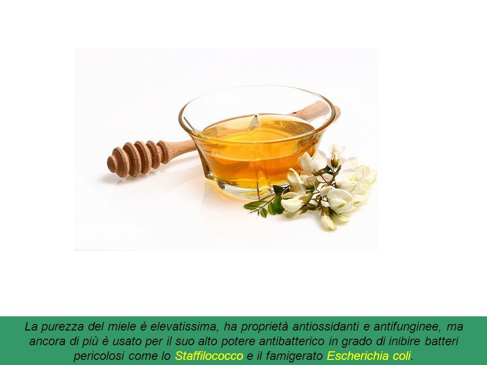 Miele di Ulmo : il 90% del nettare raccolto dalle api deriva dal fiore di Ulmo un albero originario del Cile. Dopo la sua raccolta non viene adulterat