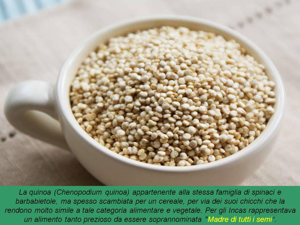 Quinoa : pianta erbacea del Perù, che contiene una buona fonte di fosforo, potassio e manganese. Inoltre, un'elevata dose di magnesio e più calcio del