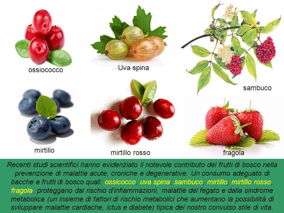 Frutti di bosco : categoria di frutta che si sviluppa nel clima umido del sottobosco i più noti sono: amarena, ribes, ribes nero, lampone, gelso nero,