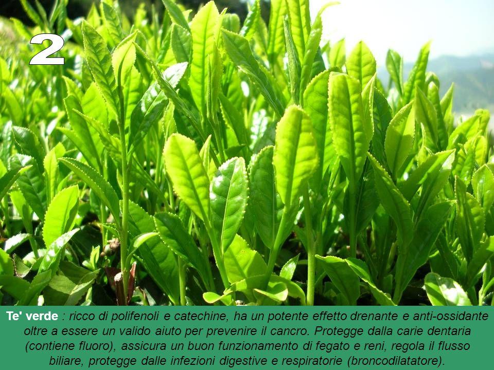 Te verde : ricco di polifenoli e catechine, ha un potente effetto drenante e anti-ossidante oltre a essere un valido aiuto per prevenire il cancro.