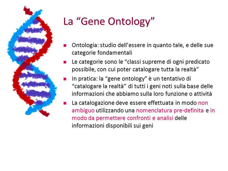 Gene Ontology Consideriamo un gene, e la rispettiva proteina codificata Consideriamo un gene, e la rispettiva proteina codificata Per catalogare il gene possiamo cominciare a chiederci: Per catalogare il gene possiamo cominciare a chiederci: Dove è localizzata la proteina, una volta sintetizzata.