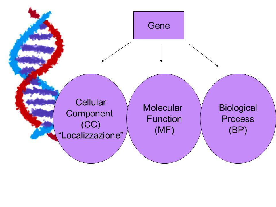 GO I termini (o attributi ) associati a un gene sono quindi raggruppati in tre categorie principali I termini (o attributi ) associati a un gene sono quindi raggruppati in tre categorie principali Gli attributi associati a ciascuna categoria sono organizzati in modo gerarchico, dal più generico al più specifico Gli attributi associati a ciascuna categoria sono organizzati in modo gerarchico, dal più generico al più specifico Gli attributi sono pre-definiti in modo da evitare ambiguità Gli attributi sono pre-definiti in modo da evitare ambiguità