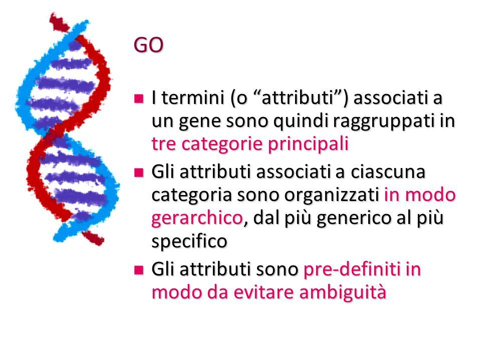 GO Esistono tool bioinformatici che fanno proprio questo: Esistono tool bioinformatici che fanno proprio questo: Prendono come input una lista di identificativi di geni Prendono come input una lista di identificativi di geni Esplorano tutta la gerarchia completa delle annotazioni GO alla ricerca di nodi (annotazioni) con un numero significativamente alto di geni - e un rispettivo p-value (valore di probabilità) che ne misura la significatività: più il p-value è basso, più l'osservazione NON è casuale (come nel caso dell'E-value del BLAST) Esplorano tutta la gerarchia completa delle annotazioni GO alla ricerca di nodi (annotazioni) con un numero significativamente alto di geni - e un rispettivo p-value (valore di probabilità) che ne misura la significatività: più il p-value è basso, più l'osservazione NON è casuale (come nel caso dell'E-value del BLAST)