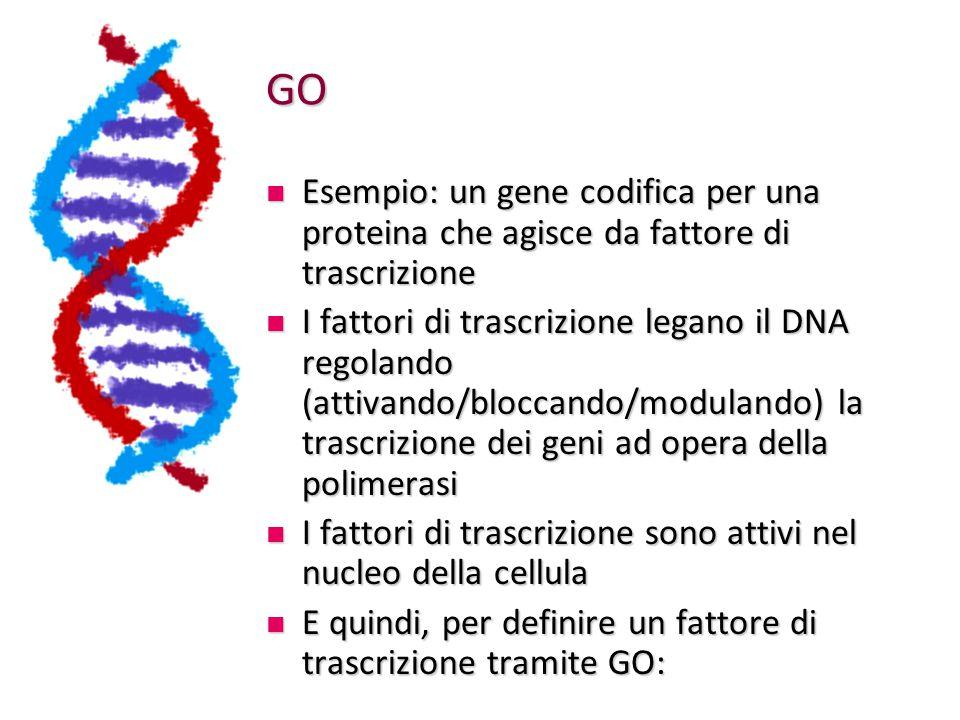 GO Esempio: un gene codifica per una proteina che agisce da fattore di trascrizione Esempio: un gene codifica per una proteina che agisce da fattore d