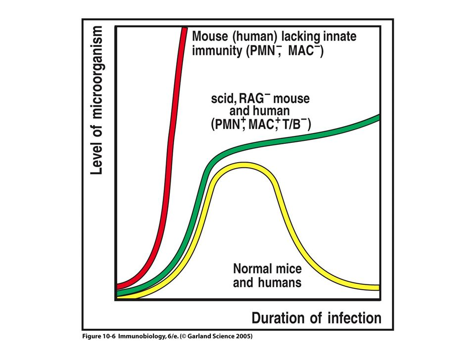 I CTL attivati uccidono le cellule infette