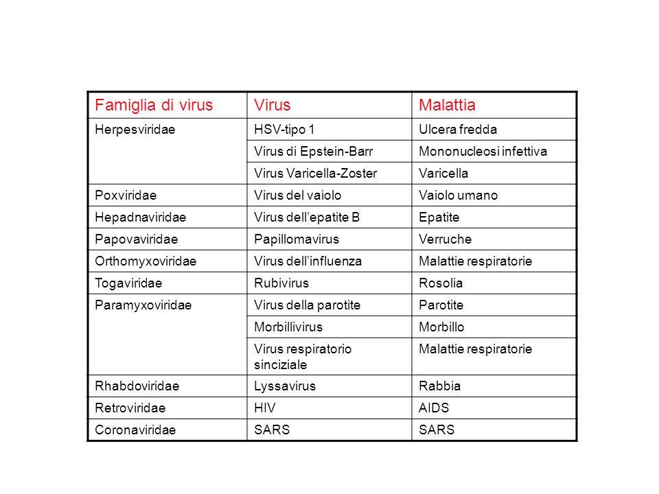Famiglia di virusVirusMalattia HerpesviridaeHSV-tipo 1Ulcera fredda Virus di Epstein-BarrMononucleosi infettiva Virus Varicella-ZosterVaricella PoxviridaeVirus del vaioloVaiolo umano HepadnaviridaeVirus dell'epatite BEpatite PapovaviridaePapillomavirusVerruche OrthomyxoviridaeVirus dell'influenzaMalattie respiratorie TogaviridaeRubivirusRosolia ParamyxoviridaeVirus della parotiteParotite MorbillivirusMorbillo Virus respiratorio sinciziale Malattie respiratorie RhabdoviridaeLyssavirusRabbia RetroviridaeHIVAIDS CoronaviridaeSARS