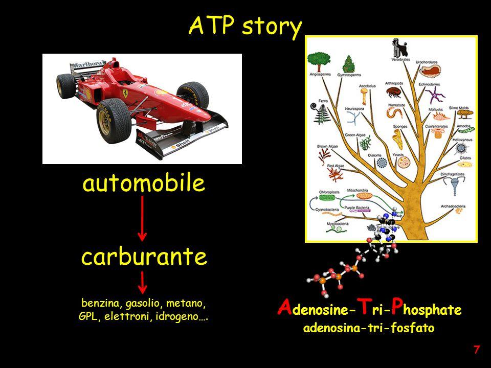 ATP story A denosine- T ri- P hosphate adenosina-tri-fosfato automobile carburante benzina, gasolio, metano, GPL, elettroni, idrogeno….