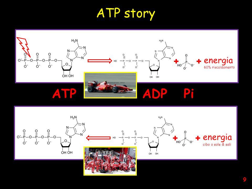 ++ energia 60% riscaldamento ++ energia cibo o sole & sali ATP story ATP ADP Pi 9