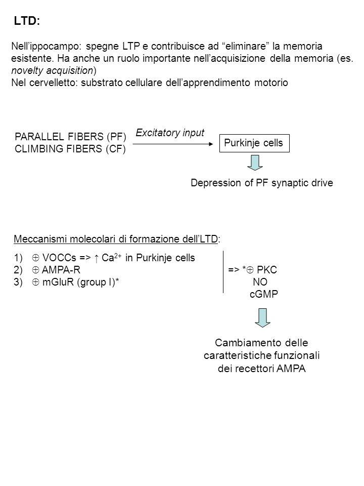 LTD: Nell'ippocampo: spegne LTP e contribuisce ad eliminare la memoria esistente.